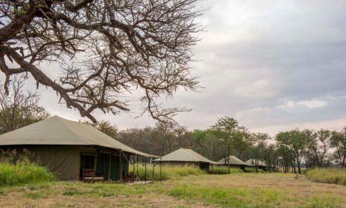 Naona Moru Camp-84