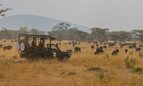 Nasikia-mobile-migration-camp7-2