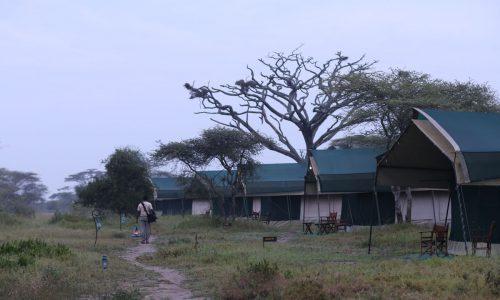 Nasikia-mobile-migration-camp76