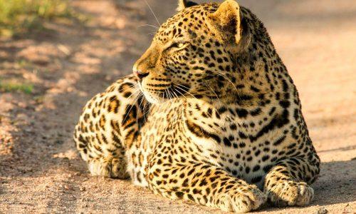 Tintswalo-Safari-Lodge-1