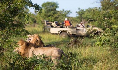 Tintswalo-Safari-Lodge-3